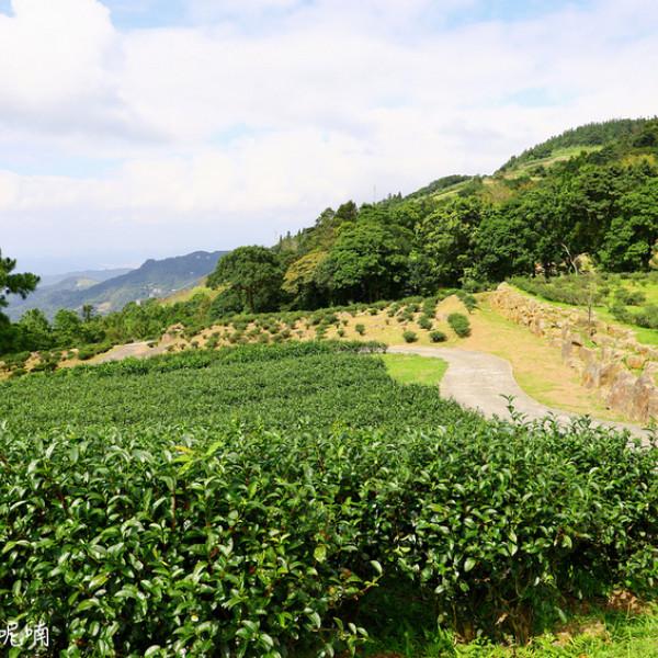 新北市 觀光 觀光工廠‧農牧場 台灣農林熊空茶園