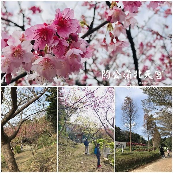 桃園市 觀光 觀光景點 龜山關公嶺北天宮櫻花