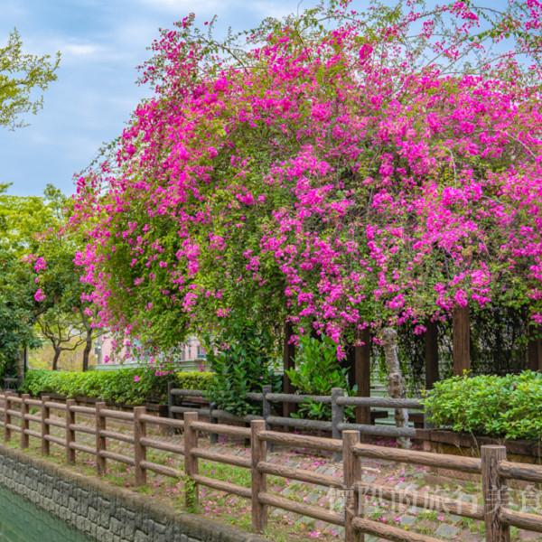 台南市 觀光 公園 南圳綠堤堤岸公園