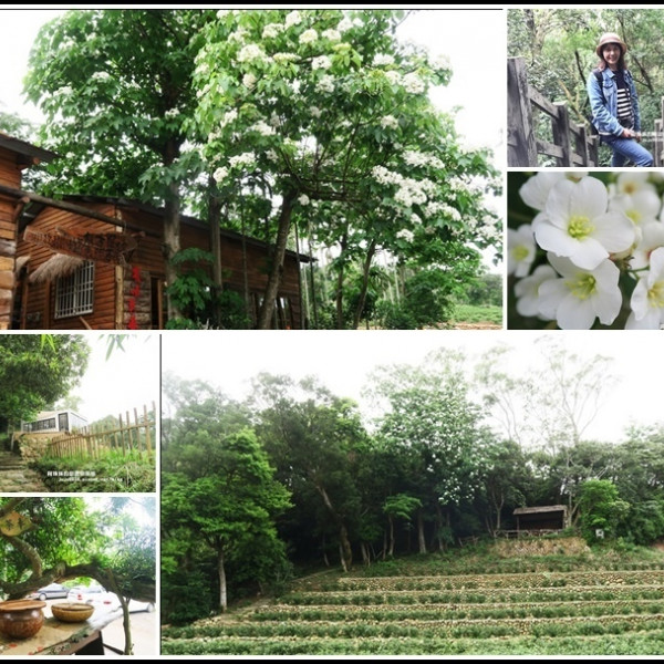 桃園市 觀光 觀光景點 和窯文創園區桐花秘境