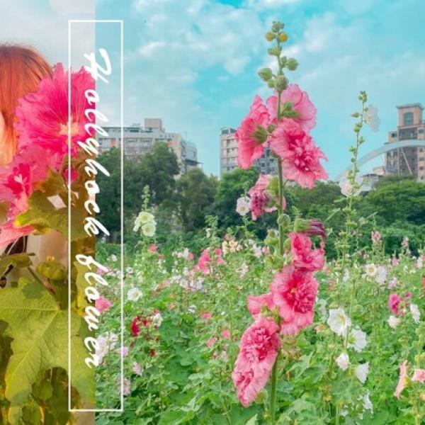 台北市 觀光 公園 蜀葵之森