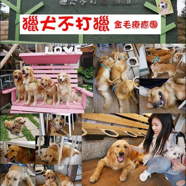 台中市 觀光 觀光景點 獵犬不打獵