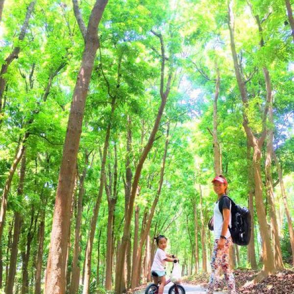 台南市 觀光 觀光景點 川文山森林生態保育農場