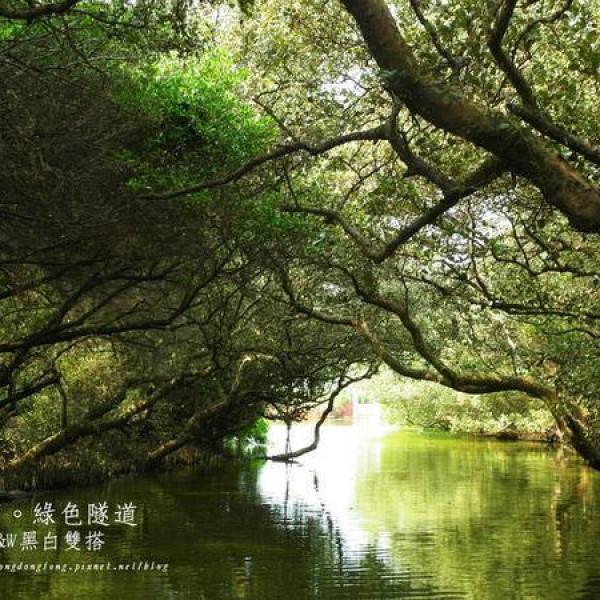 台南市 休閒旅遊 景點 景點其他 四草綠色隧道