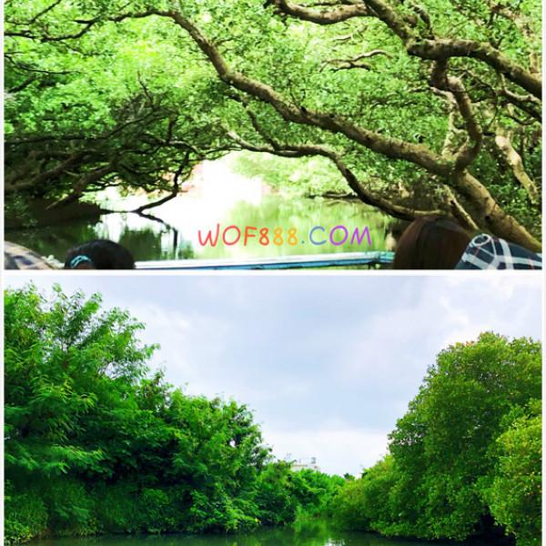 台南市 觀光 觀光景點 四草綠色隧道