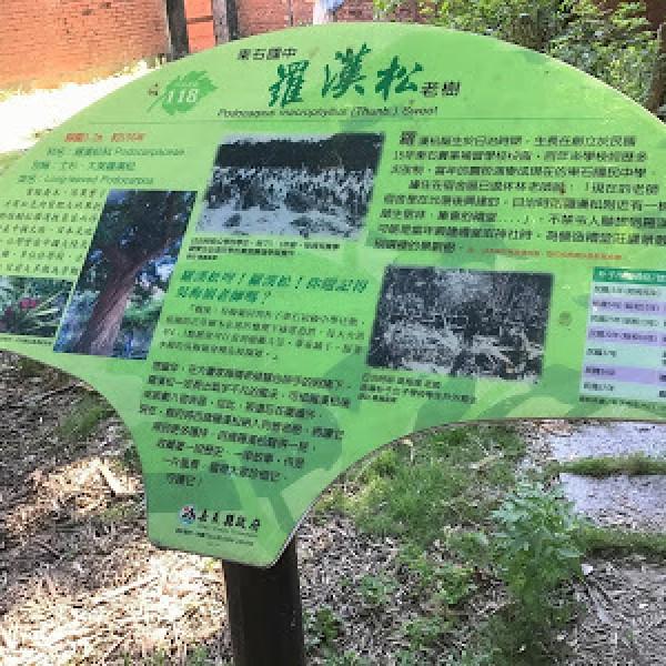 嘉義縣 觀光 觀光景點 東石國中百年羅漢松