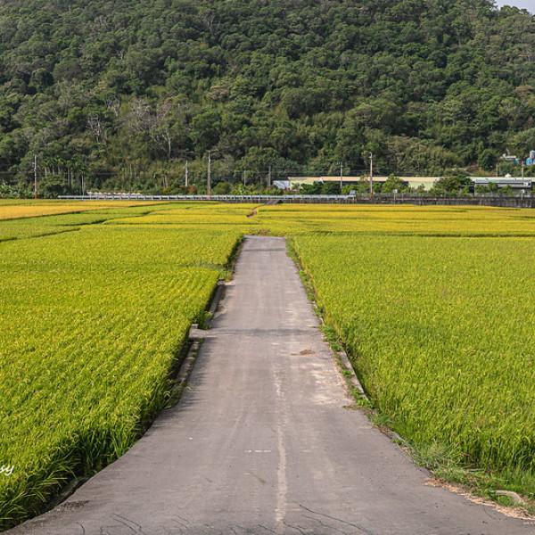 苗栗縣 觀光 觀光景點 鯉魚潭村