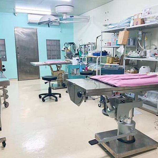 台中市 觀光 其他 浪浪樂活醫療室