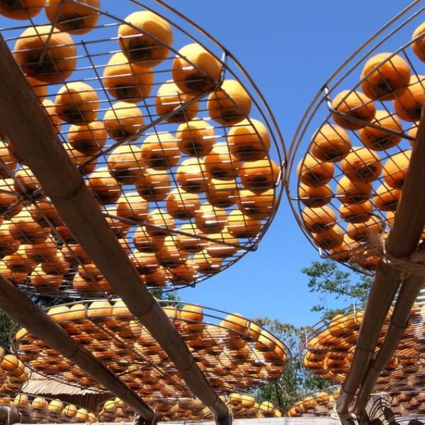 新竹縣 觀光 觀光工廠‧農牧場 味衛佳柿餅教育農場