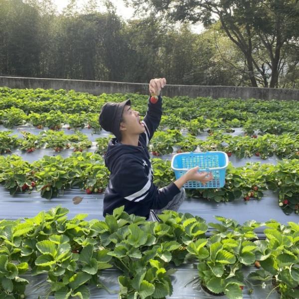 苗栗縣 觀光 觀光工廠‧農牧場 瘋小莓