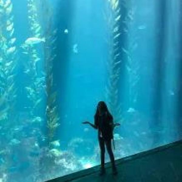 台北市 觀光 休閒娛樂場所 藍天大海