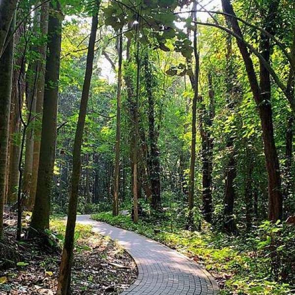 嘉義市 觀光 公園 林業試驗所嘉義樹木園