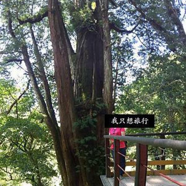 桃園市 觀光 休閒娛樂場所 拉拉山神木步道
