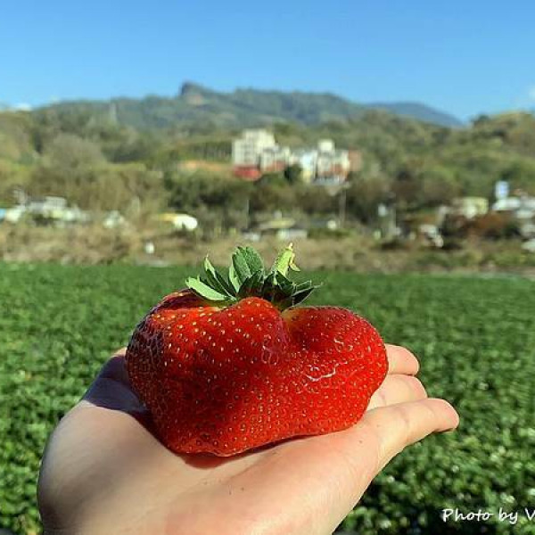 苗栗縣 觀光 觀光工廠‧農牧場 一等長宏原草莓園