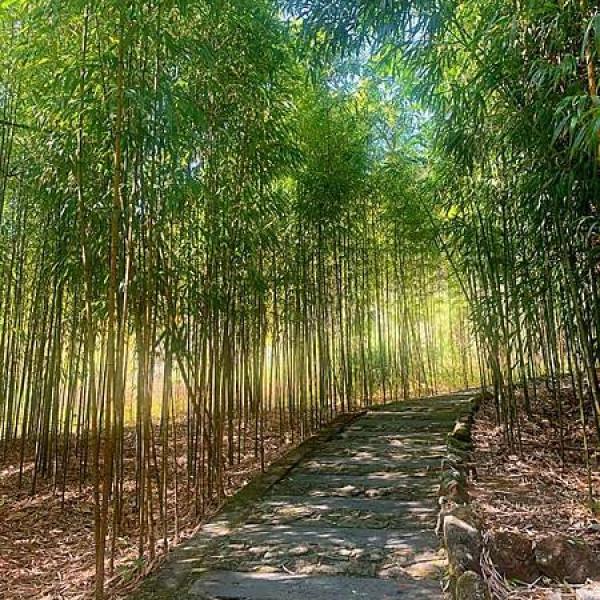 嘉義縣 觀光 觀光景點 頂湖自然生態區 Dinghu Trail
