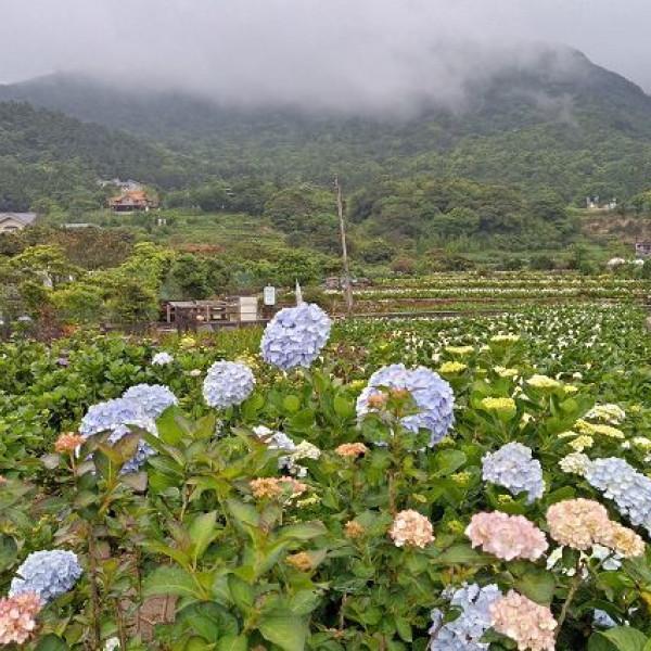 台北市 觀光 公園 竹子湖