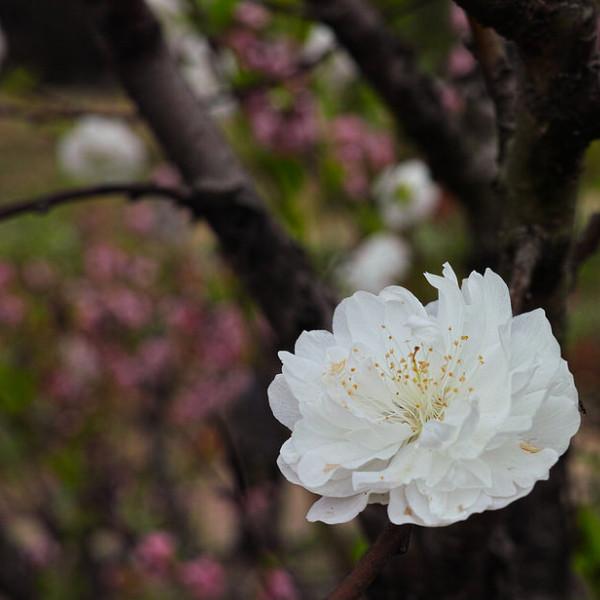 台北市 觀光 觀光工廠‧農牧場 杏花林休閒農場