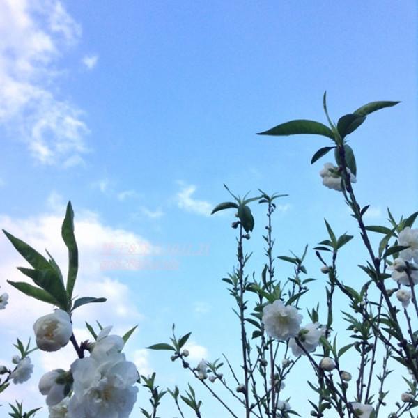 台北市 休閒旅遊 景點 森林遊樂區 登高步道