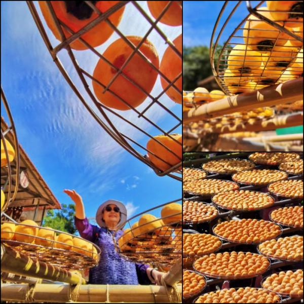新竹縣 觀光 觀光工廠‧農牧場 味衛佳柿餅觀光農場