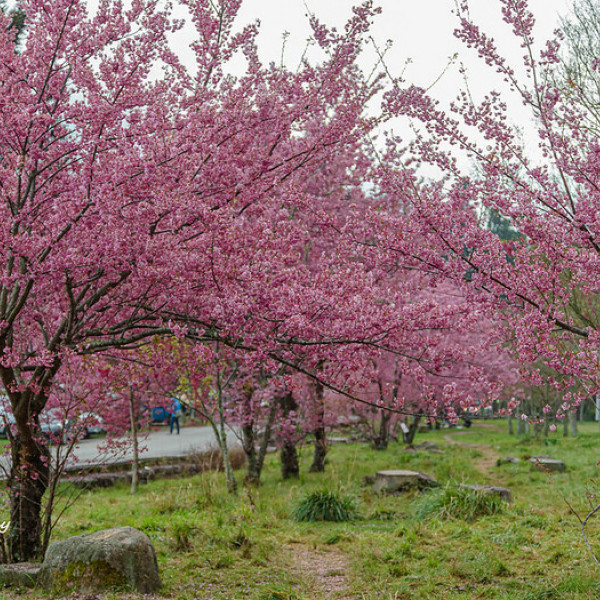 台中市 觀光 觀光工廠‧農牧場 武陵農場