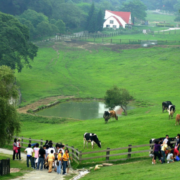苗栗縣 觀光 觀光工廠‧農牧場 飛牛牧場