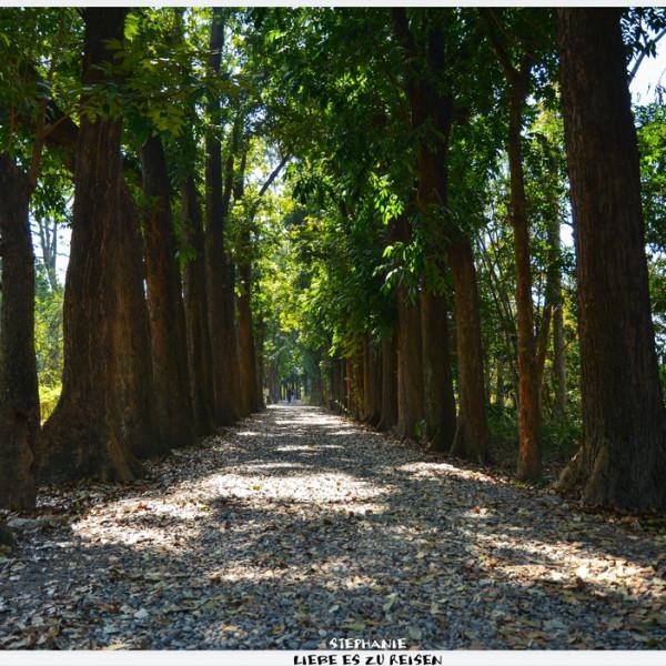 高雄市 休閒旅遊 景點 公園 新威森林公園