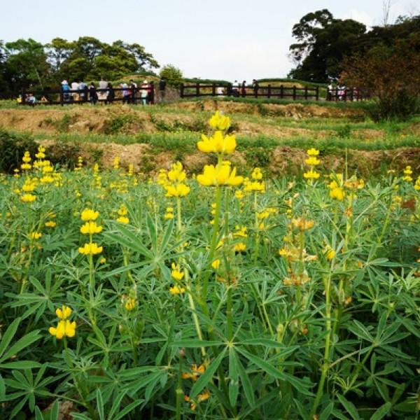 台北市 休閒旅遊 景點 森林遊樂區 樟湖步道