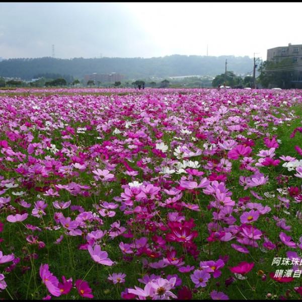 桃園市 休閒旅遊 景點 景點其他 龍潭自行車道