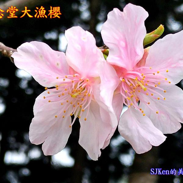 台北市 休閒旅遊 景點 古蹟寺廟 中正紀念堂(兩廳院藝文廣場)