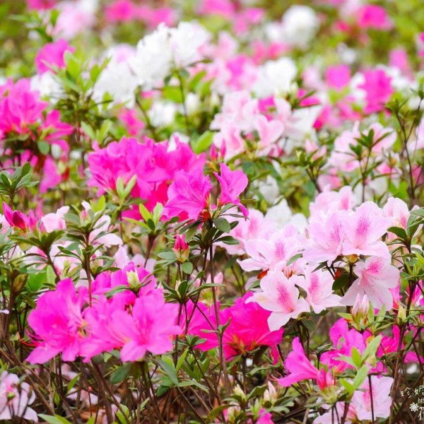 台北市 休閒旅遊 景點 公園 大安森林公園