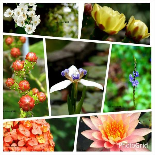 台北市 休閒旅遊 景點 觀光林園 台北植物園