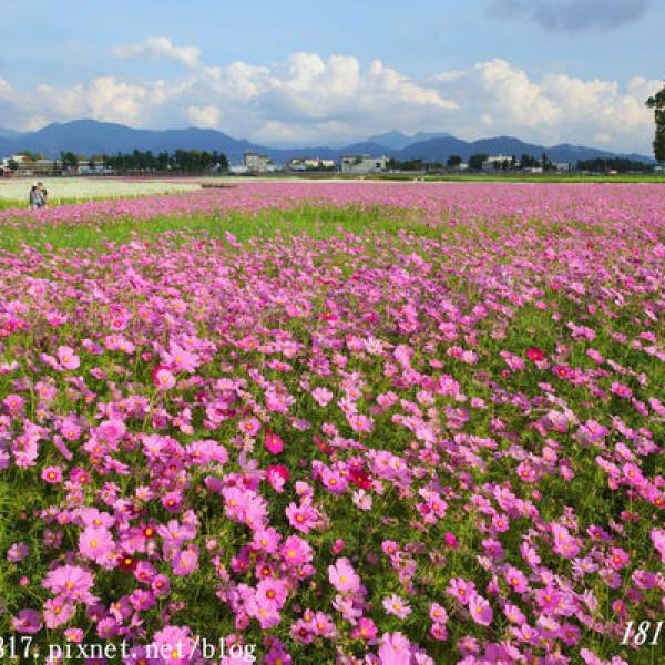 台中市 休閒旅遊 景點 觀光花園 新社花海