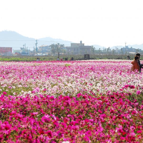 台中市 休閒旅遊 景點 觀光花園 2013臺中國際花毯節