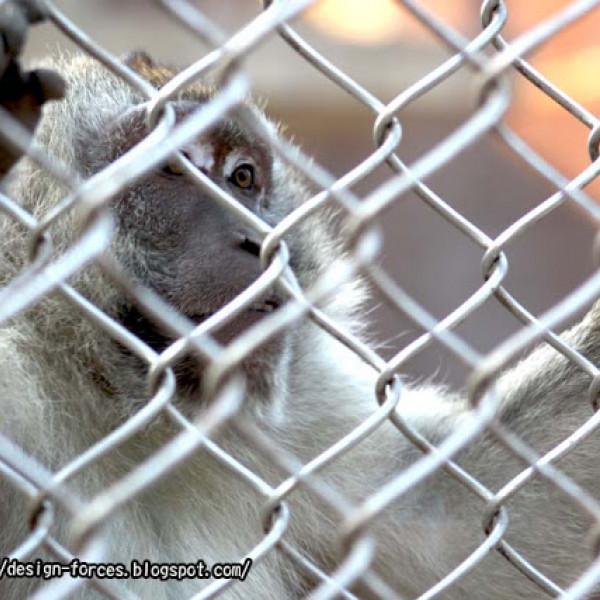 金門縣 休閒旅遊 景點 動物園 金門畜產試驗所