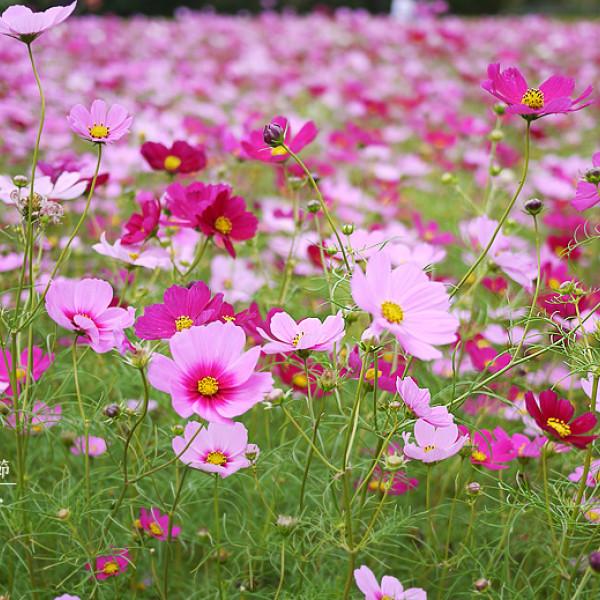 桃園市 休閒旅遊 景點 古蹟寺廟 龍潭大池