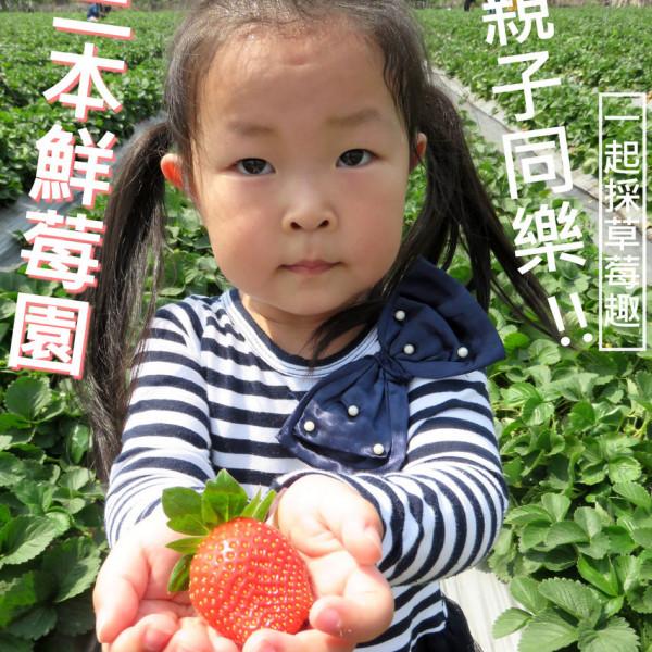 高雄市 休閒旅遊 景點 觀光果園 三本鮮莓園