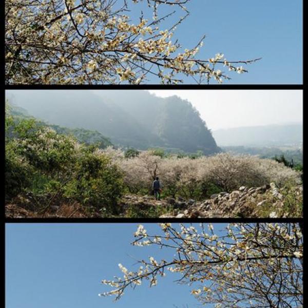 南投縣 休閒旅遊 景點 觀光花園 互助國小