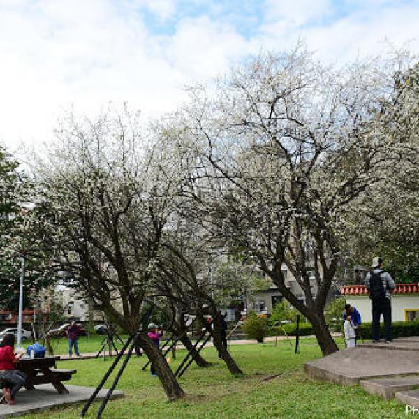 台北市 休閒旅遊 景點 公園 志成公園