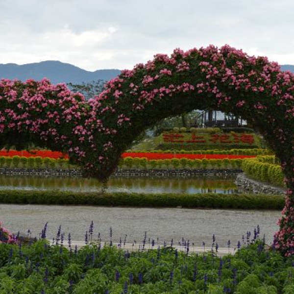 台東縣 休閒旅遊 景點 觀光花園 池上花海