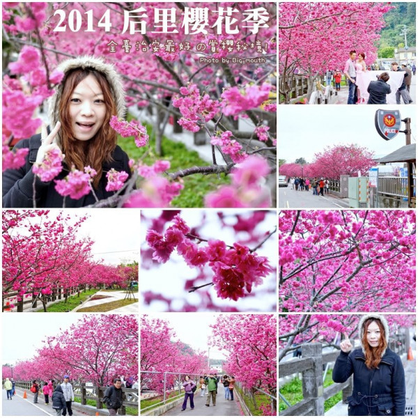 台中市 休閒旅遊 景點 觀光花園 2014后里櫻花季