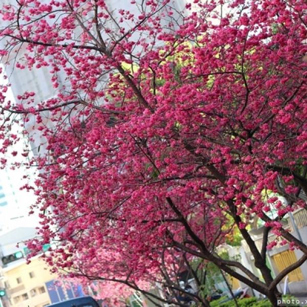 台中市 休閒旅遊 景點 景點其他 文昌國小
