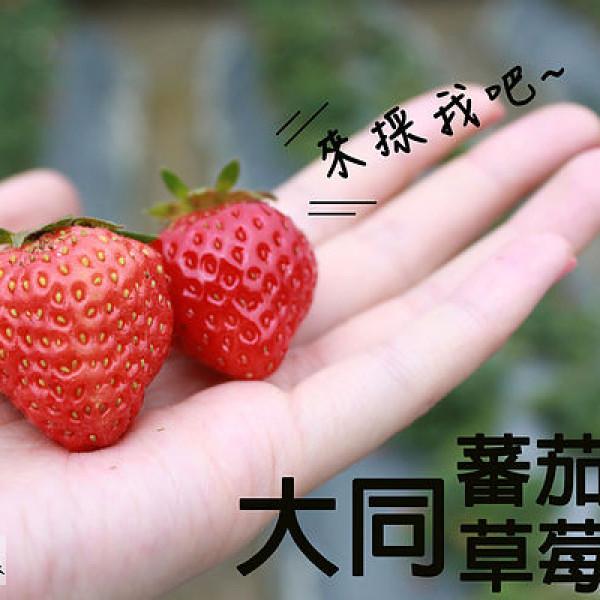 新竹市 休閒旅遊 景點 觀光果園 大同番茄草莓園