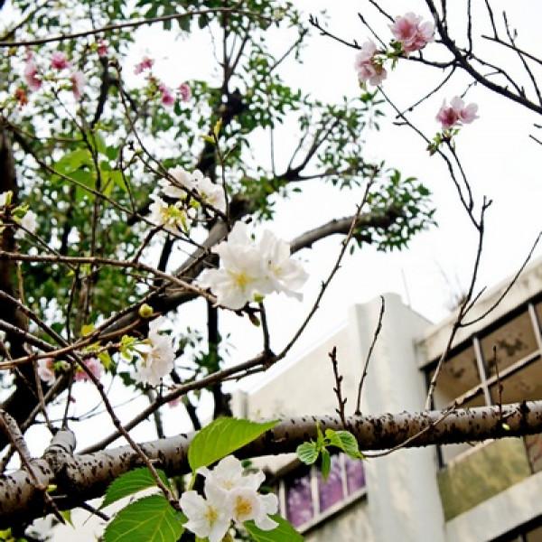台北市 休閒旅遊 景點 公園 牯嶺公園
