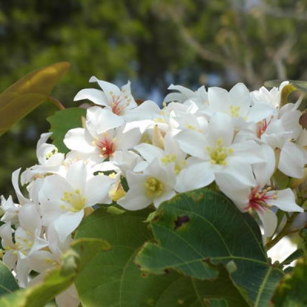 苗栗縣 休閒旅遊 景點 景點其他 銅鑼挑鹽古道(自行車道)