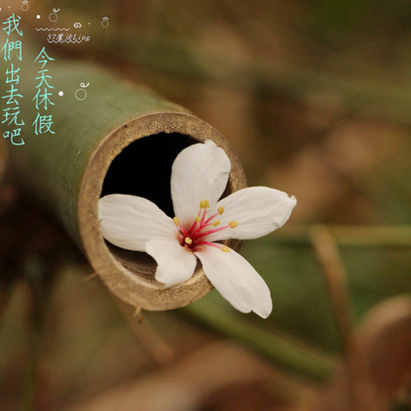 彰化縣 休閒旅遊 景點 景點其他 彰化福田社區