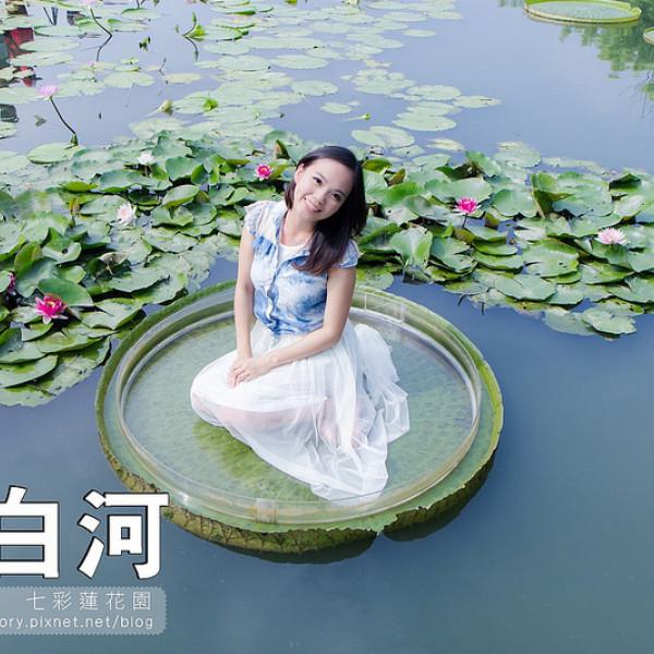 台南市 休閒旅遊 景點 觀光花園 七彩香水蓮花園