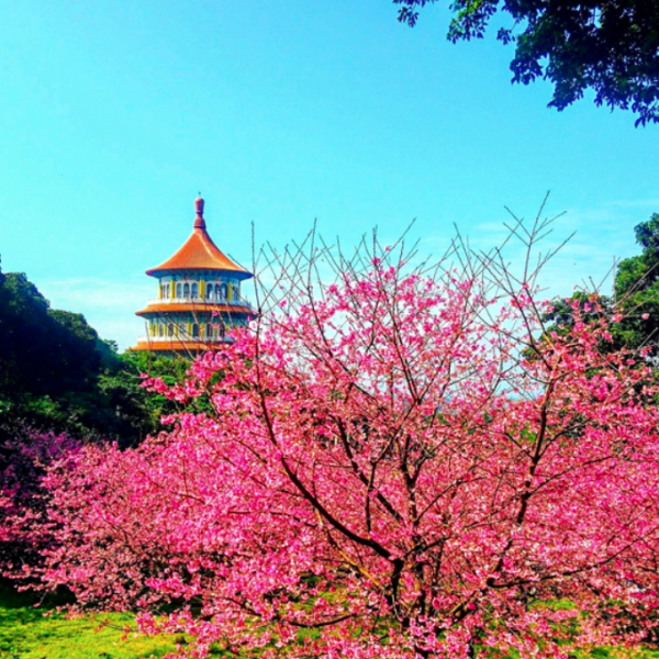 新北市 休閒旅遊 景點 古蹟寺廟 無極天元宮