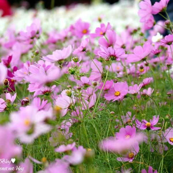 桃園市 休閒旅遊 景點 景點其他 2014蘆竹花彩節 萬花童樂會