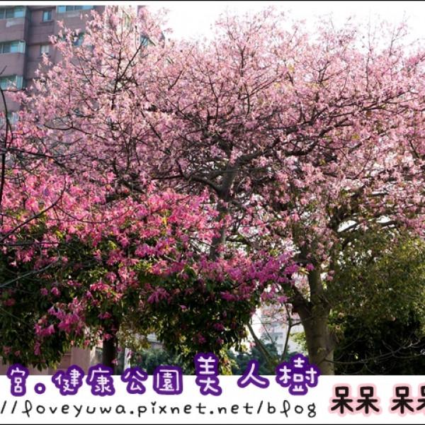 台中市 休閒旅遊 景點 景點其他 尊天宮美人櫻