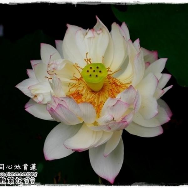 台北市 觀光 觀光景點 白石湖同心池